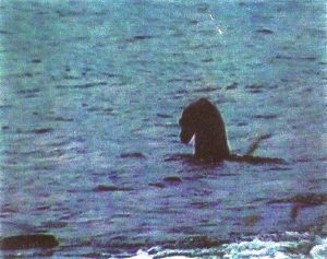 a still from Wilkinson's fake Nessy video